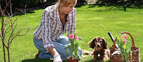 Talleres para novatos de Jardinería en Panama Jardinería